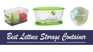 best Lettuce-Keeper